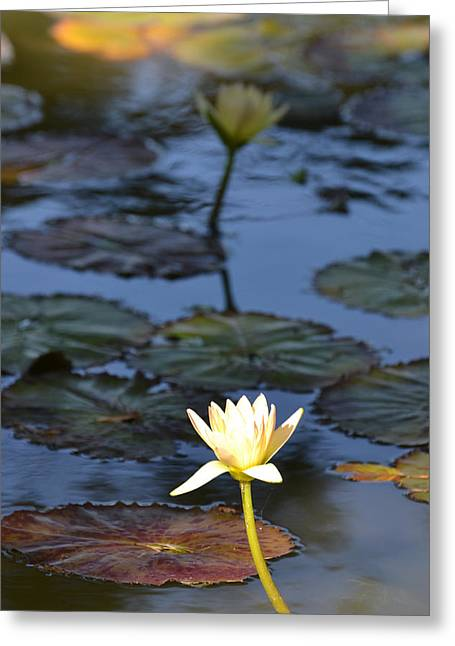 Bill Mock Greeting Cards - The Echo of a Lotus Flower Greeting Card by Bill Mock