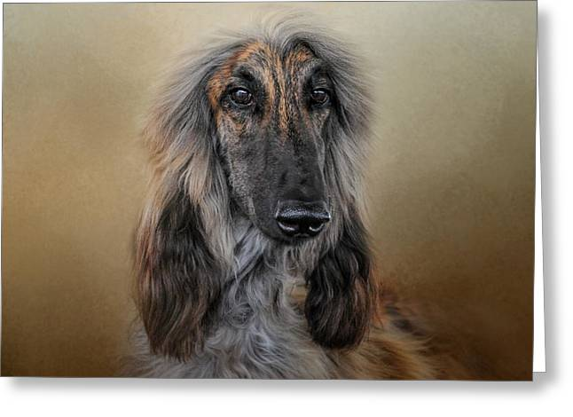 Artistic Photography Greeting Cards - The Elegant Afghan Hound Greeting Card by Jai Johnson