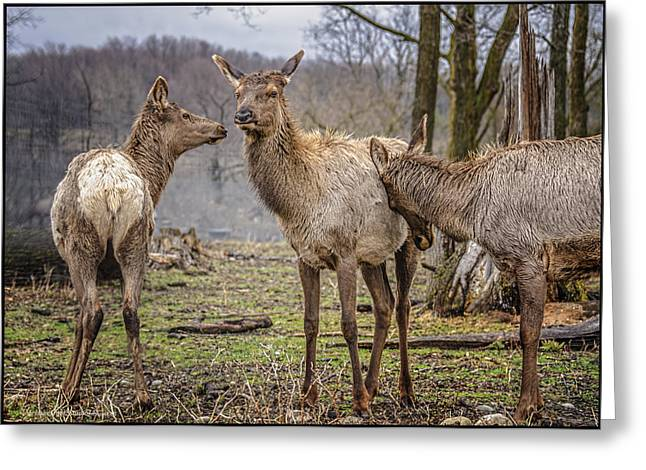 Grazing Snow Greeting Cards - The Elks Convention Greeting Card by LeeAnn McLaneGoetz McLaneGoetzStudioLLCcom