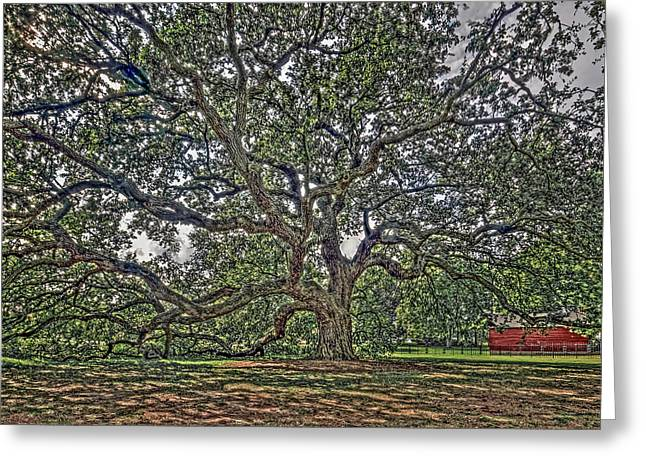 Proclamation Greeting Cards - The Emancipation Oak at Hampton University Greeting Card by Jerry Gammon