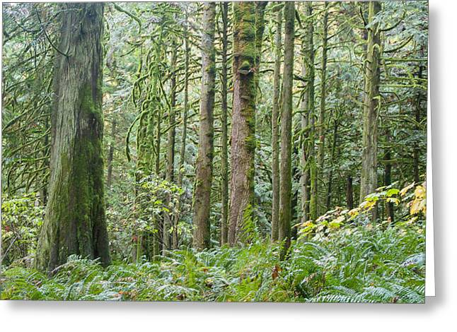 Raining Greeting Cards - The Emerald Forest Greeting Card by Linda McRae