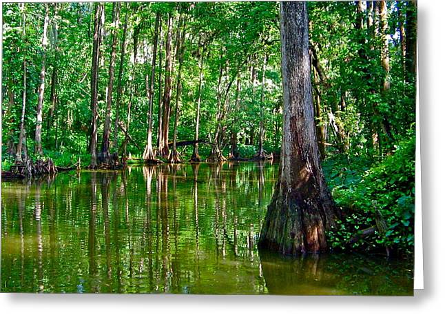 Trees Reflecting In Water Greeting Cards - The Emerald Swamp Greeting Card by Denise Mazzocco