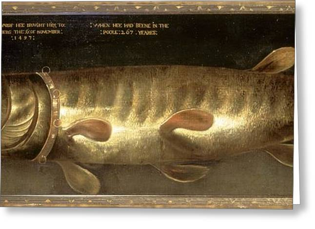 Northern Pike Greeting Cards - The Emperors Pike, 17th Century Greeting Card by Natural History Museum, London