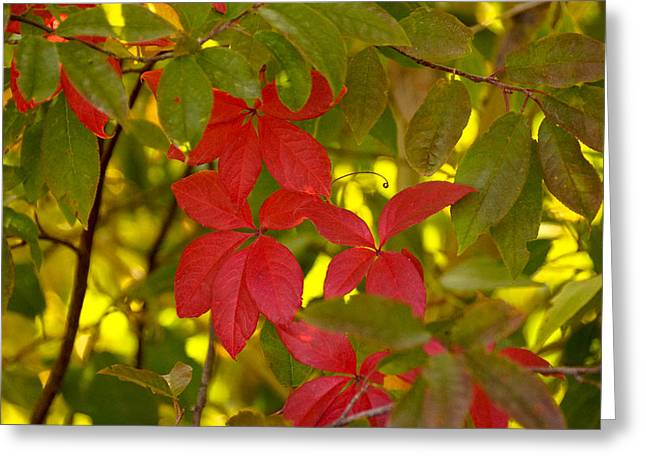 Red Fallen Leave Greeting Cards - The end of summer Greeting Card by Gloria Pasko