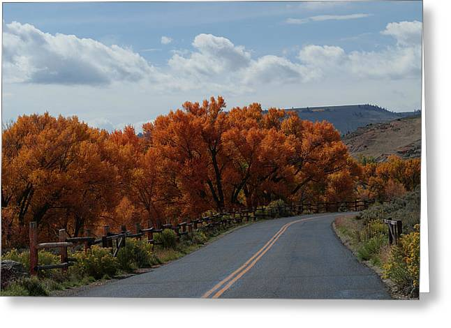 The Trees Greeting Cards - The Entrance Greeting Card by Ernie Echols