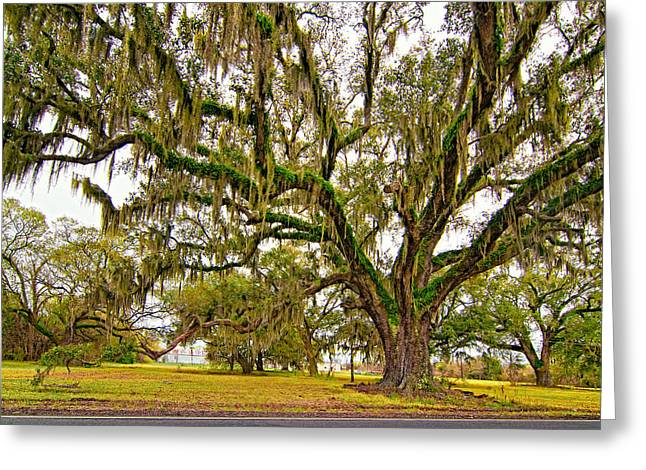 Oak Alley Plantation Greeting Cards - The Essence Greeting Card by Steve Harrington