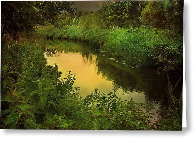 Brown Trout Photographs Greeting Cards - The Evening Brook Greeting Card by Roy  McPeak