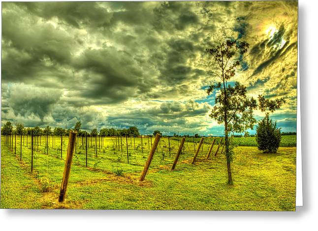 Blue Grapes Greeting Cards - The Exotic Vineyard Greeting Card by  Caleb McGinn
