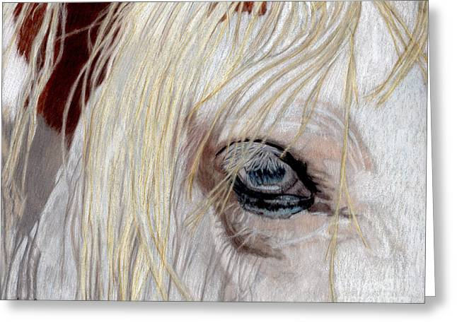 Pencil Drawings Of Pets Greeting Cards - The Eye has it Greeting Card by Gail Seufferlein
