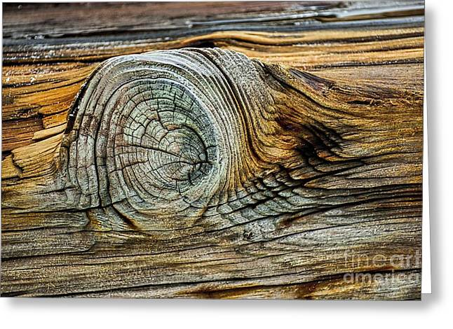 Beach Photos Greeting Cards - The Eye in the Wood Greeting Card by Norman Gabitzsch