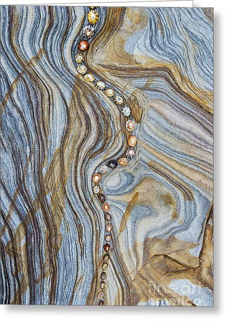 Shell Pattern Greeting Cards - The Eye Line  Greeting Card by Tim Gainey