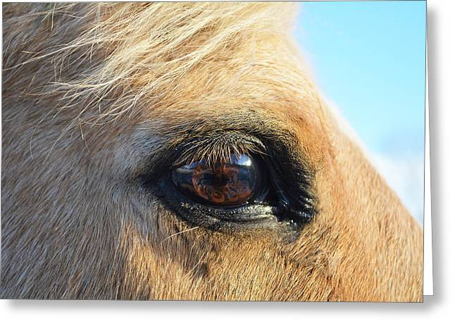 Love The Animal Greeting Cards - The Eye of Love Greeting Card by Skye Ryan-Evans