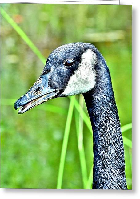 Scenery Greeting Cards - The Eye of the Goose Greeting Card by Kim Bemis