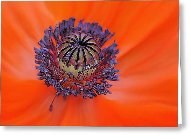 Spunky Greeting Cards - The Eye of the Poppy Greeting Card by Linda Muir