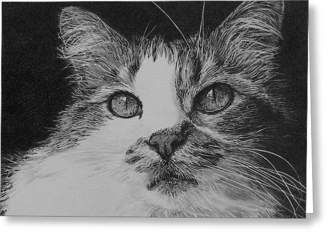 Drawings Of Cats Greeting Cards - The Eyes Have It Greeting Card by Kathryn Hansen