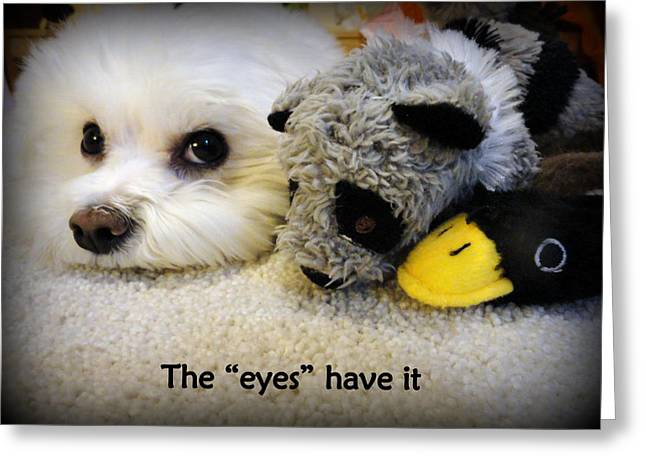 Toy Maltese Photographs Greeting Cards - The Eyes Have It Greeting Card by Mary Beth Landis