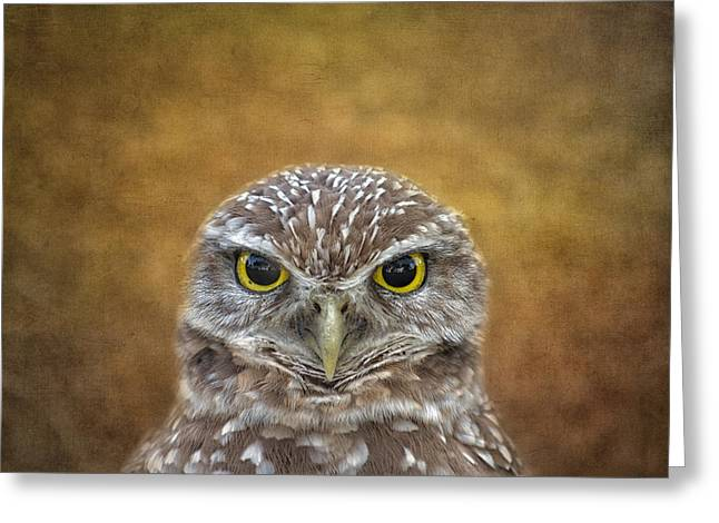 Kim Photographs Greeting Cards - The Eyes Say It All Greeting Card by Kim Hojnacki