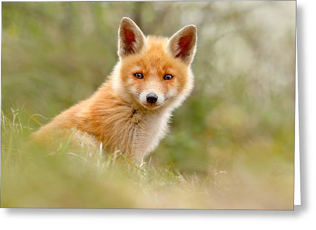Red Fox Pup Greeting Cards - The Face of Innocence _ Red Fox Kit Greeting Card by Roeselien Raimond