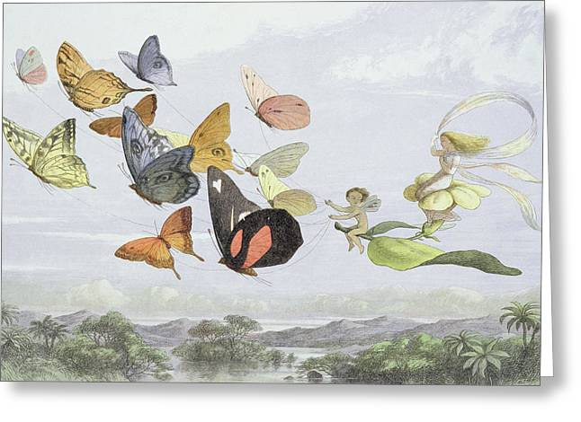 Butterflies Drawings Greeting Cards - The Fairy Queens Carriage, Illustration Greeting Card by Richard Doyle