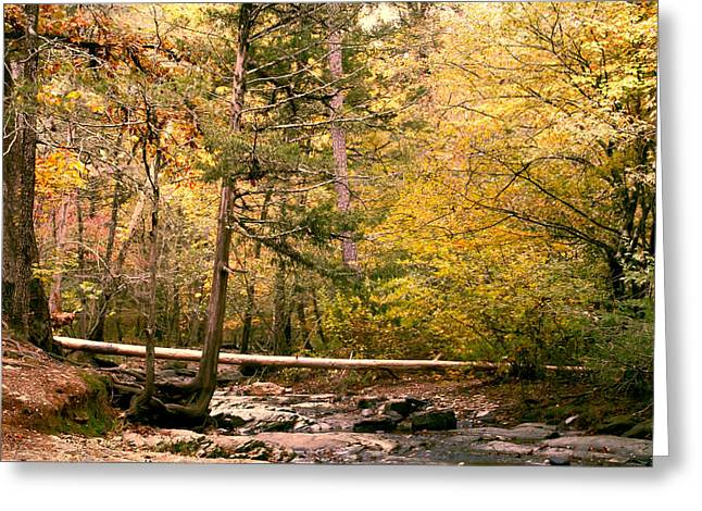Creekbed Greeting Cards - The Fallen Greeting Card by Carolyn Fletcher