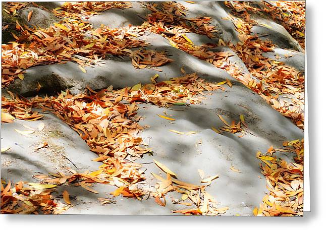 Fallen Leaf Greeting Cards - The Fallen Greeting Card by Donna Blackhall