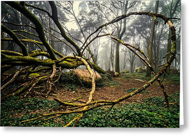 Mystical Landscape Greeting Cards - The Fallen Tree II Greeting Card by Marco Oliveira