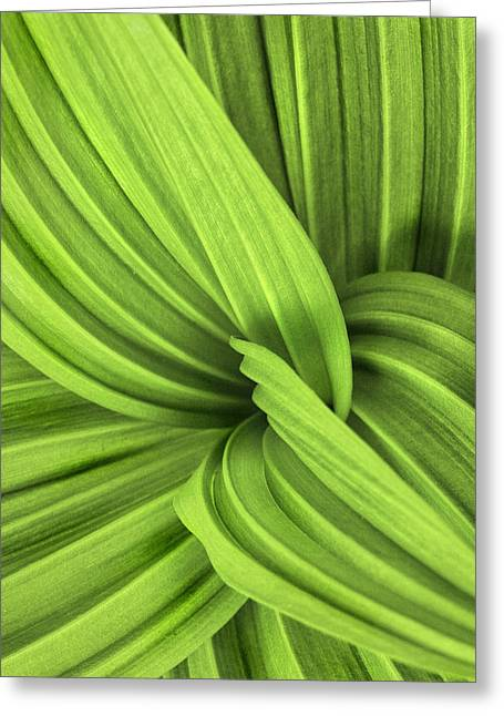 False Hellebore Greeting Cards - The False Hellebore-Abstract Patterns in Nature Greeting Card by Thomas Schoeller