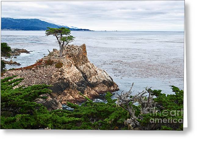 Foggy Beach Greeting Cards - The famous Lone Cypress tree at Pebble Beach in Monterey California Greeting Card by Jamie Pham