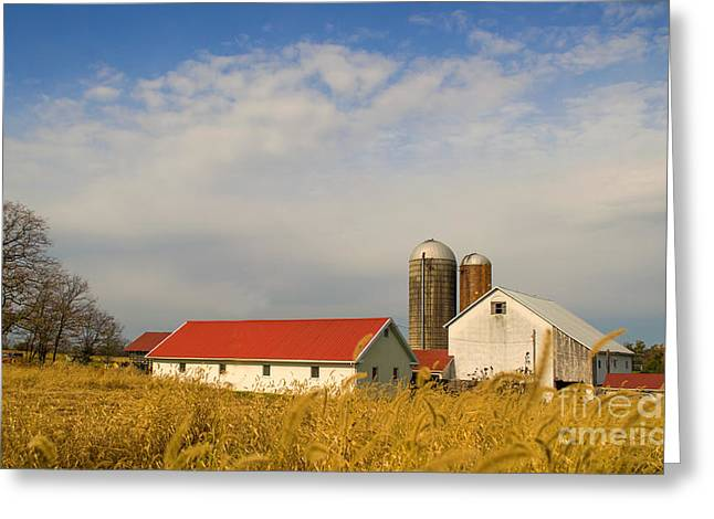 Red Roofed Barn Greeting Cards - The farm at BlackRock Greeting Card by Rima Biswas