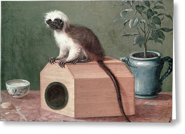 Botanist Greeting Cards - The Favourite Monkey Of Carl Linnaeus 1707-78 Oil On Canvas Greeting Card by Gustavus Hesselius