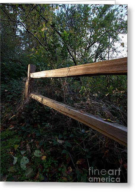 Rood Greeting Cards - The Fence Greeting Card by Jessie Swimeley