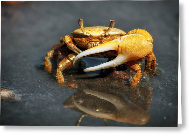 Fiddler Crab Greeting Cards - The Fiddler Crab Greeting Card by Mountain Dreams