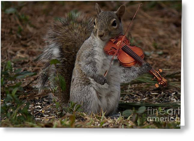 Playing Musical Instruments Greeting Cards - The Fiddler Greeting Card by Sandra Clark