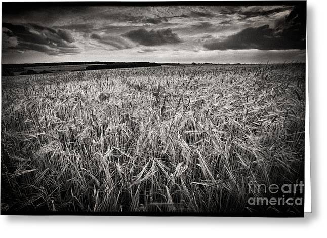 Mono Landscape Greeting Cards - The Field 1 Greeting Card by Rod McLean