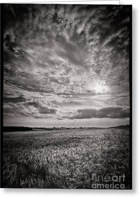 Mono Landscape Greeting Cards - The Field 2 Greeting Card by Rod McLean