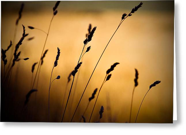The Field Greeting Card by Dave Bowman
