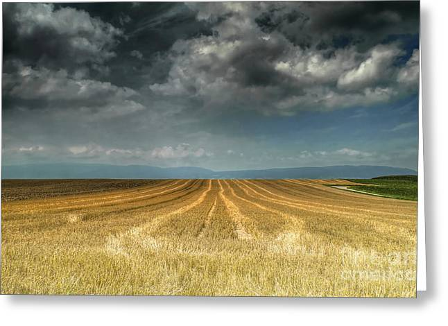 Michelle Greeting Cards - The Field Greeting Card by Michelle Meenawong