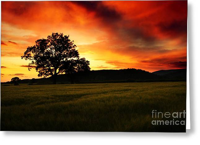 the Fire on the Sky Greeting Card by Angel  Tarantella