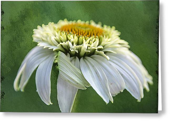 Coneflower Greeting Cards - The First Coneflower Greeting Card by Terry Rowe