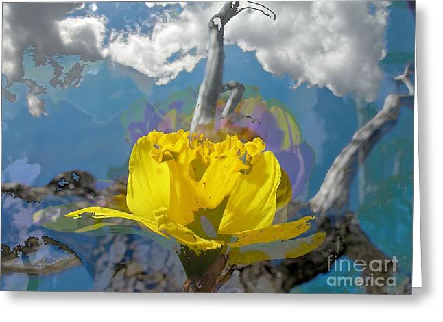 Daffodils Photographs Greeting Cards - The first one Greeting Card by Flow Fitzgerald