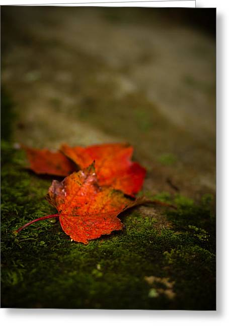 Moss Greeting Cards - The First Whispers Of Fall Greeting Card by Shane Holsclaw