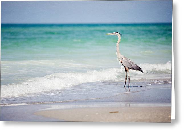 Lisa Russo Greeting Cards - The Fishing Heron on the Beach at Longboat Key Florida Greeting Card by Lisa Russo