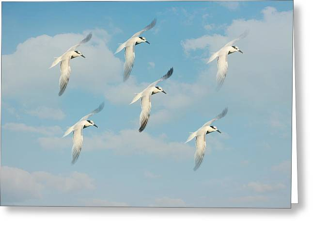 Seabirds Greeting Cards - The Flight Greeting Card by Kim Hojnacki