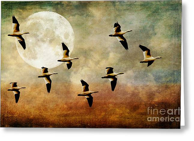 Birds Moon Greeting Cards - The Flight Of The Snow Geese Greeting Card by Lois Bryan