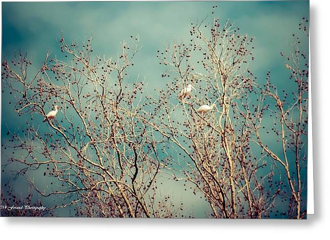 The Flock  Greeting Card by Debra Forand