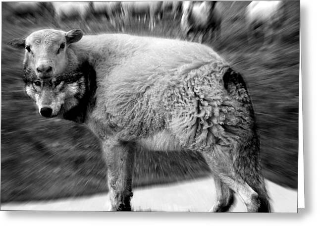 """""""photo Manipulation"""" Mixed Media Greeting Cards - The Flock Is Safe grayscale Greeting Card by Marian Voicu"""