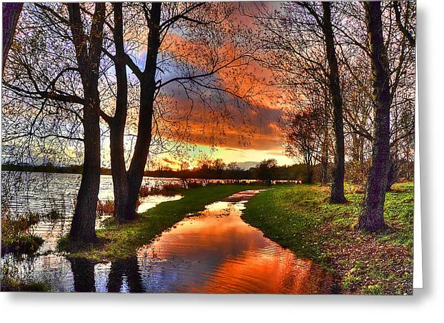Cat Reflection Greeting Cards - The Flooded Sunset Path Greeting Card by Kim Shatwell-Irishphotographer