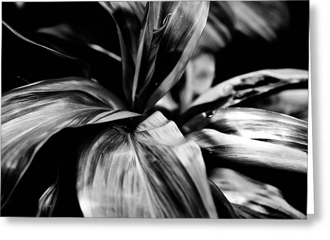 Chanticleer Greeting Cards - The Flow of Black and White Greeting Card by Louis Dallara