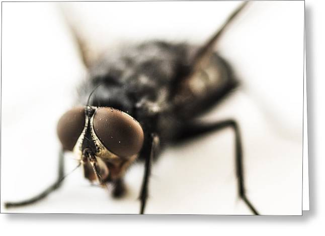 The Fly Greeting Card by Marco Oliveira