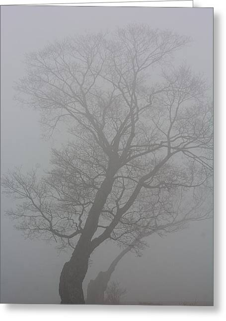 The Foggy Dew Greeting Card by James Canning